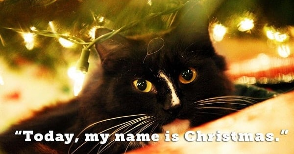 17 Festive Cats that Like Totally Love Christmas!