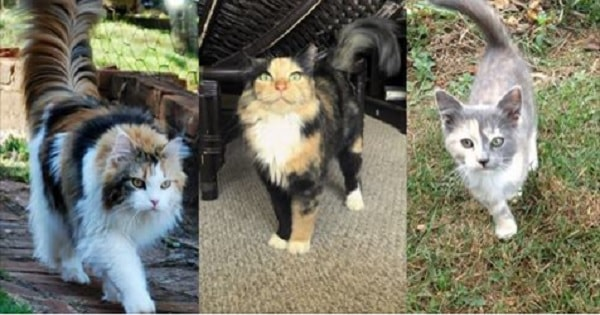 20 Photos of Calicos and Torties Proving Just How Cute They Are!