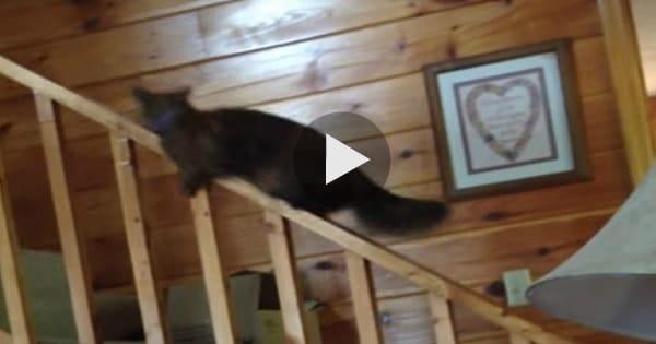 Crazy Kitty Slides Down Banister!