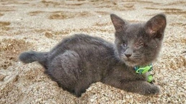 Rescued Blind Kitten With Heart Condition Tackles 'Bucket List' Like a Rock Star!