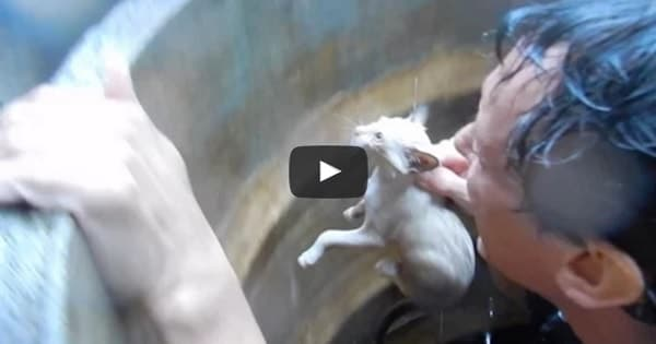 CAUGHT ON CAMERA: Drowning Kittens Rescued in Just a Nick of Time!