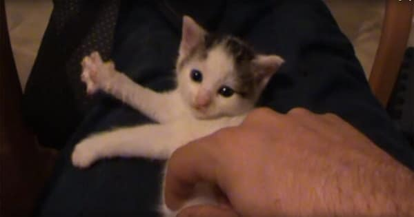 As Soon As This Kitten Is Petted, He Starts to Play an Instrument!