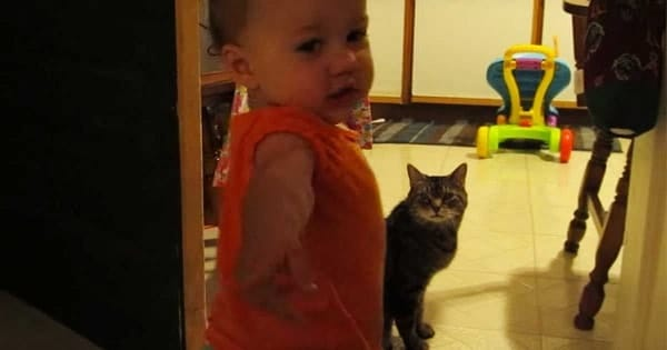 Dad Films Baby Daughter's Adorable Morning Routine with Her Tabby Cat!