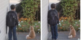 Faithful Family Cat Sees Child Off to School Every Day - and Then ...