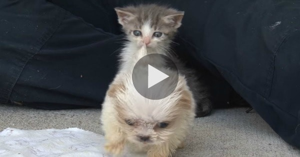 Cutest Rescue Kitty and Puppy Are the Very Best of Friends!