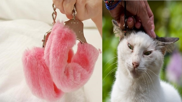 Into bondage? It could be because of your cat, study finds