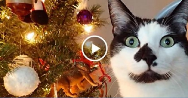 The 8 Signs Your Cat Believes in Santa!