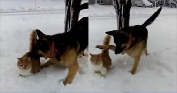 Dog Foolishly 'dunks' Cat in Snow in This Adorable Clip!
