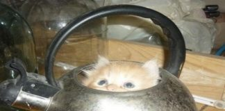13 Hilarious Samples of Cats Hiding in the Most Random Places!