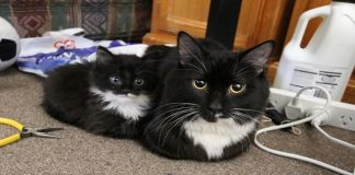 15 Adorable Cats with Their Insanely Cute Mini-me Counterparts!