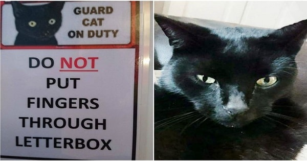 Cat Who Terrifies Mailmen and Delivery People – and Even the Family …