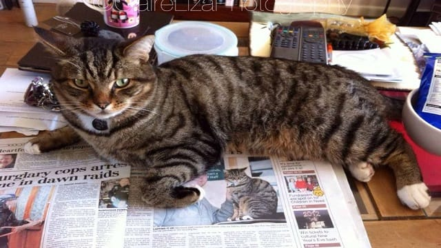 Heartbreak and Sadness As Brutus the Morrisons cat Crosses the …