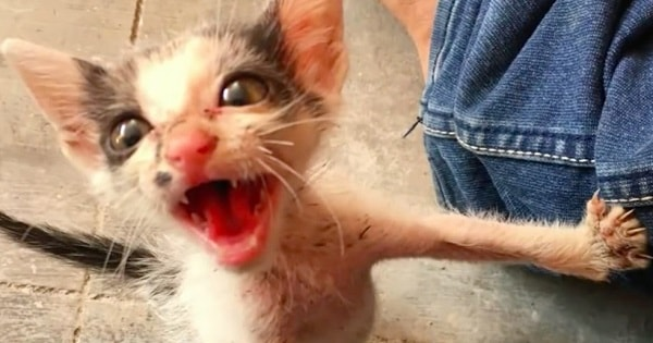 Man Hears Frantic Meows – and Soon Discovers ….