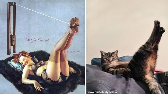 20+ Cats Posing Like Pin Up Girls!