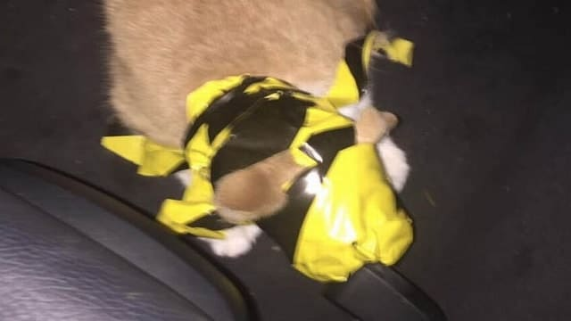 Hunt for Creeps Who Wrapped Cat in Hazard Tape in 'Deliberate' Attack!