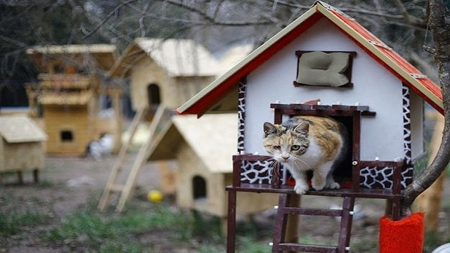 Inside Turkey's Beautiful Cat Village That Has Kitty Playgrounds, Villas and Hammocks!