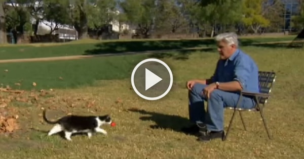 Jay Leno Proves Cats Are Smarter Than Dogs In This Funny Video!