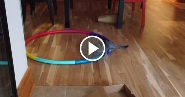 Hula Cat Rescue