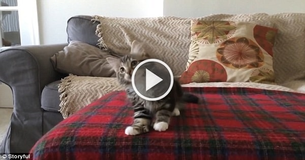 Watch Winnie the Foster Kitten Dance in Perfect Time to TECHNO Song!