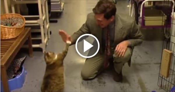 Animal Shelter Creates Funny Commercial to Promote Cat Adoptions!