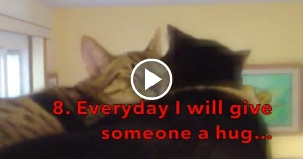 Two Adorable Cats' New Years Resolutions! Hilarious Video!