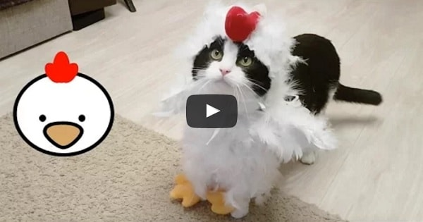 CAT COCK. 2017!! — WHAT!?!?!?!