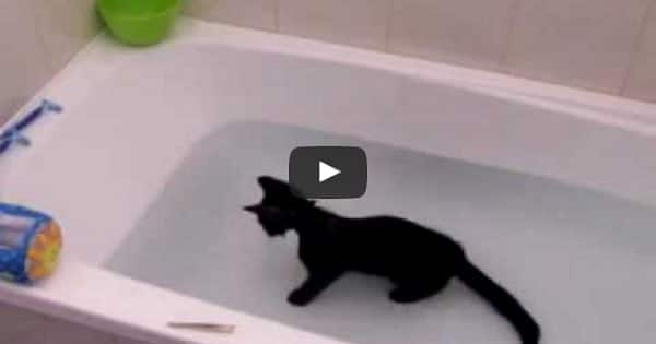 Crazy Cat Loves Water!