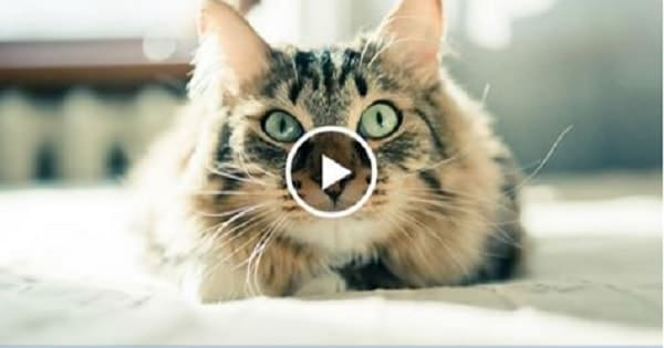 Is it Possible? How to Train Your Cat to Come When Called!