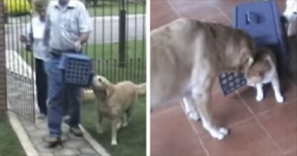 Dog Waits For Her Best Friend To Come Home