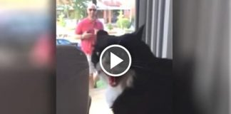 This Cat Realizes He's About To Get A Brand New Sibling And He's REALLY Not Happy About It!