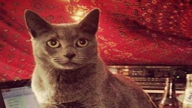 Cat Lost Since Christmas Found Clinging to Highway …