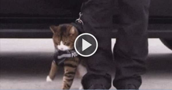 Why Police Cats Will Never Be a Thing!