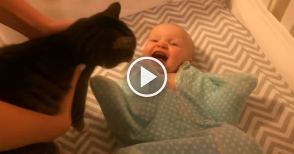 Baby Is Just So Excited to See Kitty!