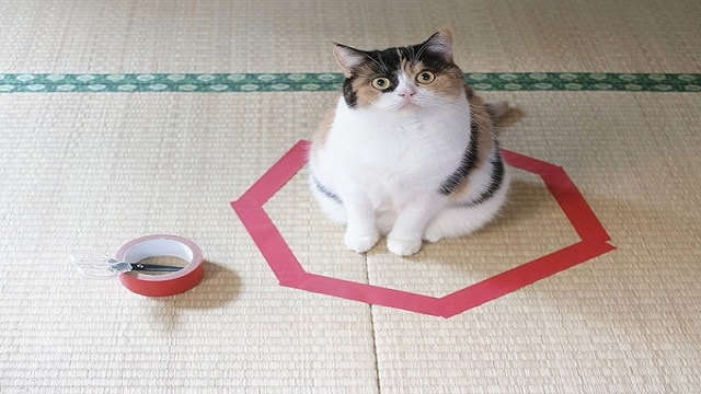 Science Simply Cannot Explain Why All Cats Are Drawn To Sitting Inside Circles!