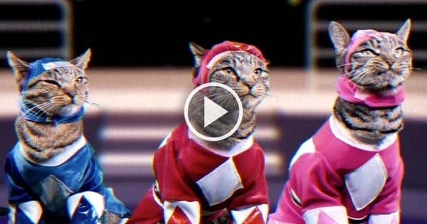 Move Over Power Rangers! The Meower Rangers is a Thing Now!