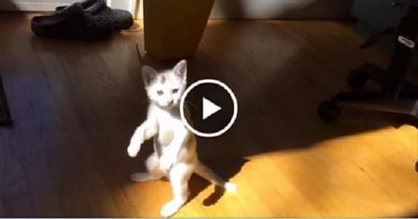 Hilarious Kitty Freaks Out in Sunlight!