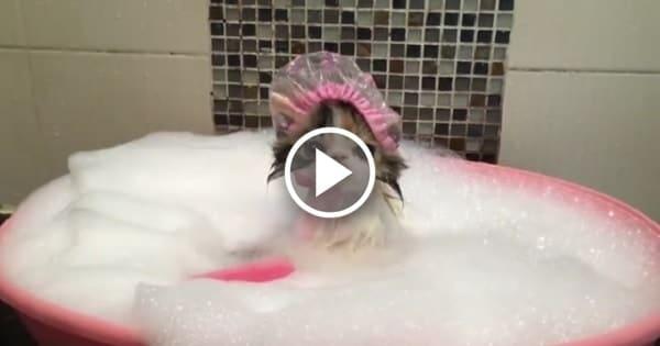 Cute Cat Takes a Bath!