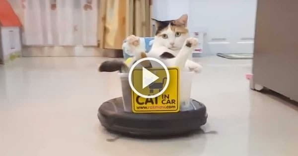 Sassy Cat Is On a Wild Ride You Won't Want to Miss!
