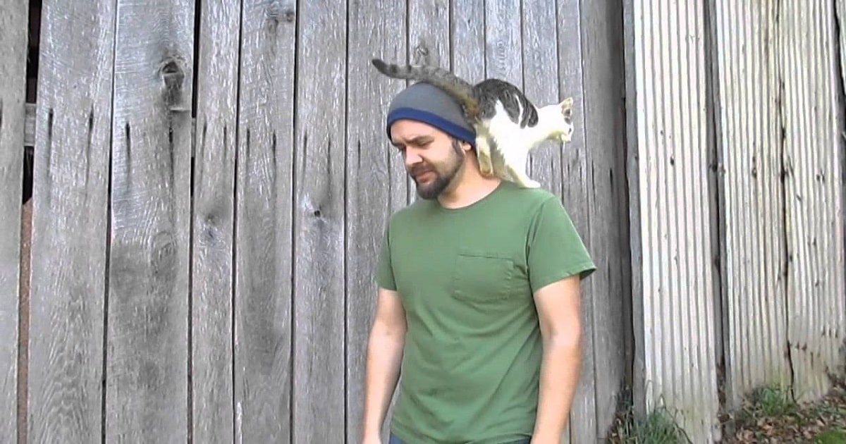 Cat Completely Photobombs Documentary Scene!