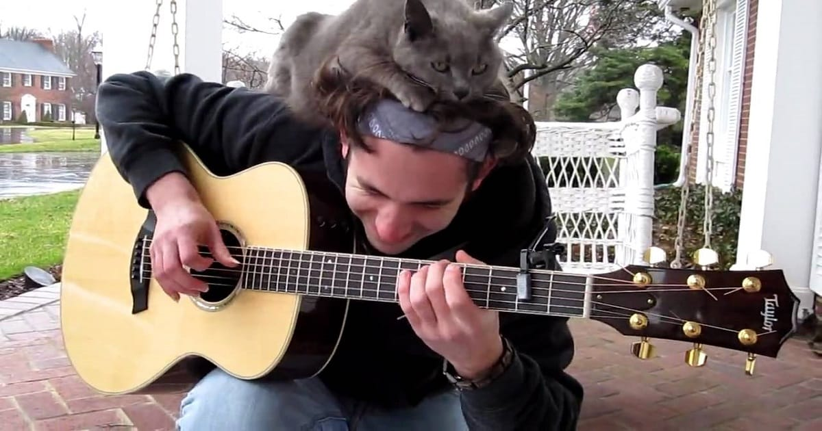 Cat Listens to His Human's Guitar Skills