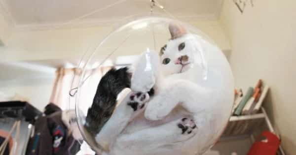 Magical Bubble Bowl Chairs For Cats May Soon Be a Thing!