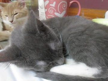 Sleeping Kitten Reacts When His Little Brother Starts to Snore!