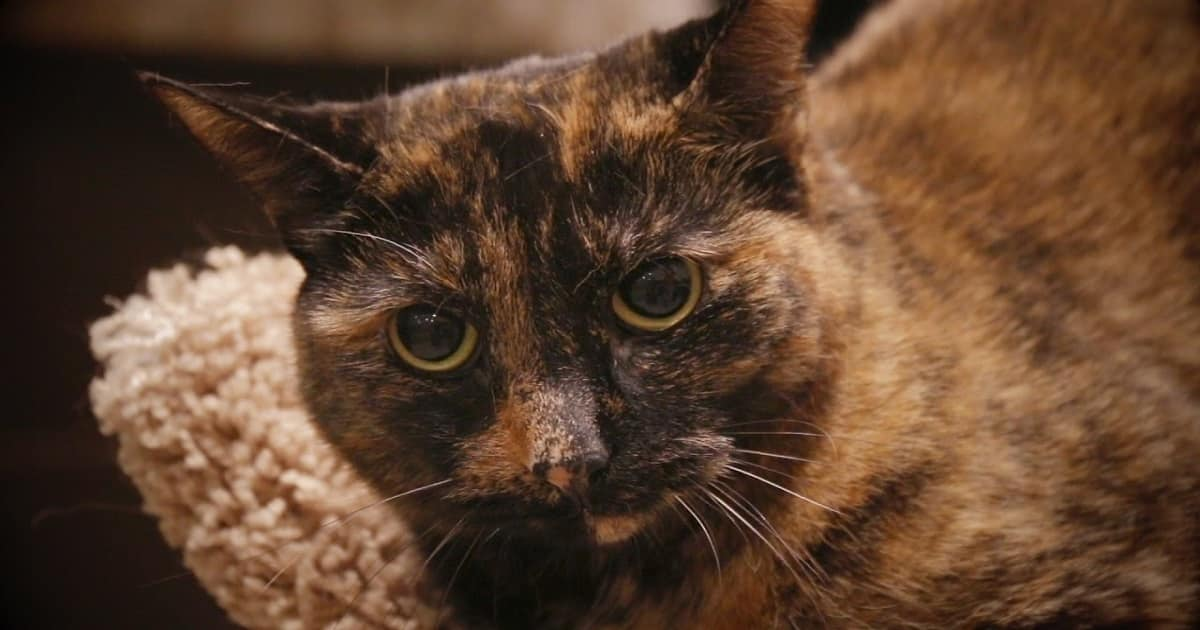 This Tortie Cat Was Surrendered to a Shelter Twice