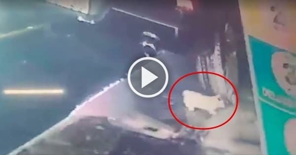 Very Brave Man Saves Kitten That Fell Out Of Car During Car Wash!