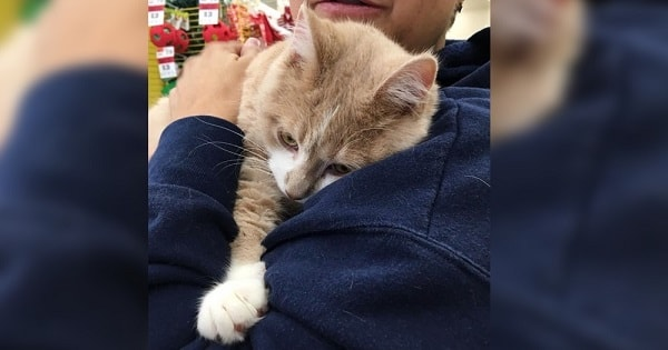 Adorable Cat Can't Stop Hugging After A Good Samaritan Adopted Him!