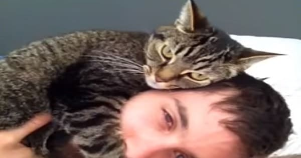 Kitten Gets Cozy On Her Human's Head – Will Surely Make Your Day!