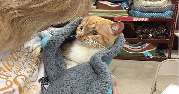 UPDATE: Benny, the Special Needs Cat No One Wanted, Sadly, Has …