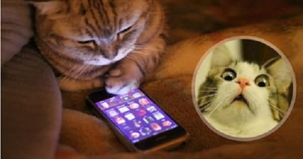 If Our Cats Could Only Text, This is EXACTLY What They'd Say!