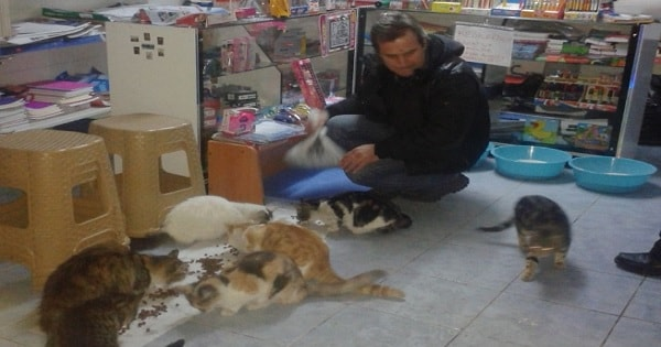 Man Opens His Shop For Stray Cats So That They Can Be Safe During Snowstorm!