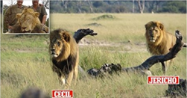 Cecil the Lion's Brother, Jericho, Found Dead Under …